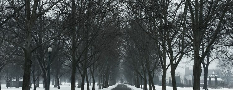 path-through-the-trees